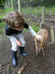 Noah gives Dasher, a three-legged deer, attention.