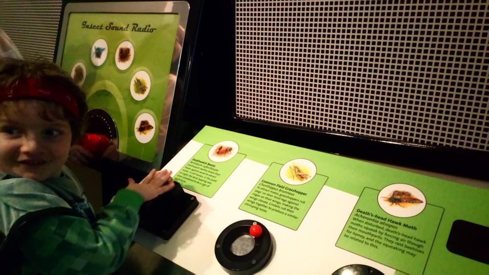 Noah plays with an exhibit in the bug house at the World Museum