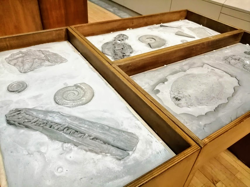 Tables with fossils in trays
