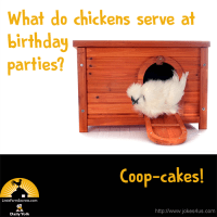 What do chickens serve at birthday parties? Coop-cakes!