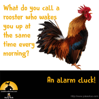 What do you call a rooster who wakes you up at the same time every morning? An alarm cluck!