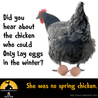 Did you hear about the chicken who could only lay eggs in the winter? She was no spring chicken.