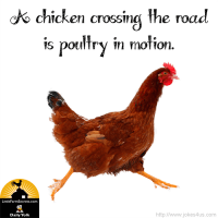 A chicken crossing the road is poultry in motion.