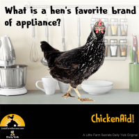 What is a hen's favorite brand of appliance? A ChickenAid!