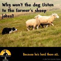 Why wouldn't the dog listen to the farmer's sheep jokes? Because he'd herd them all.