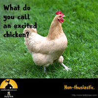 What do you call an excited chicken? Hen-thusiastic.