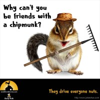 Why can't you be friends with a chipmunk? They drive everyone nuts.