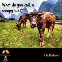 What do you call a sleepy bull? A bull-dozer!