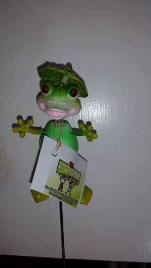 Baby Frogs cost R25 each