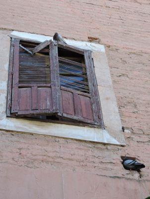 Pigeons &Wood window shutters, Marrakech
