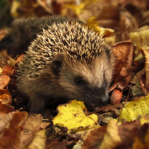 animal-autumn-close-up-134061
