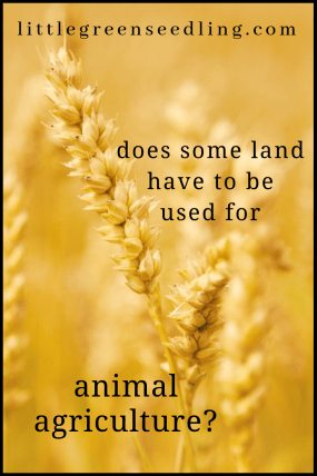 Is it true that some land can't be used to grow crops and must be used for #animal agriculture? Is this a valid argument against #veganism? #vegan #plantbased #sustainable