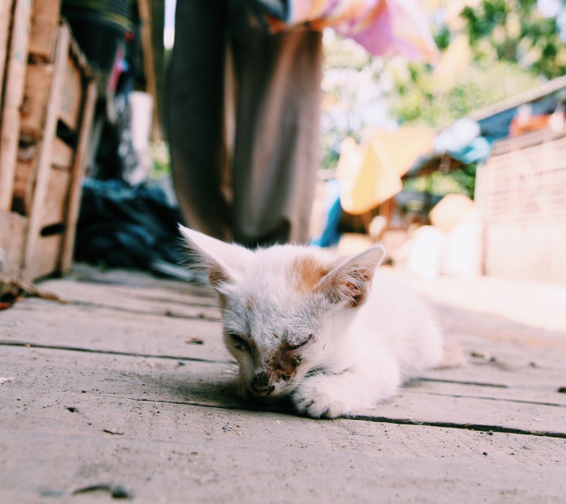 A sick little kitten
