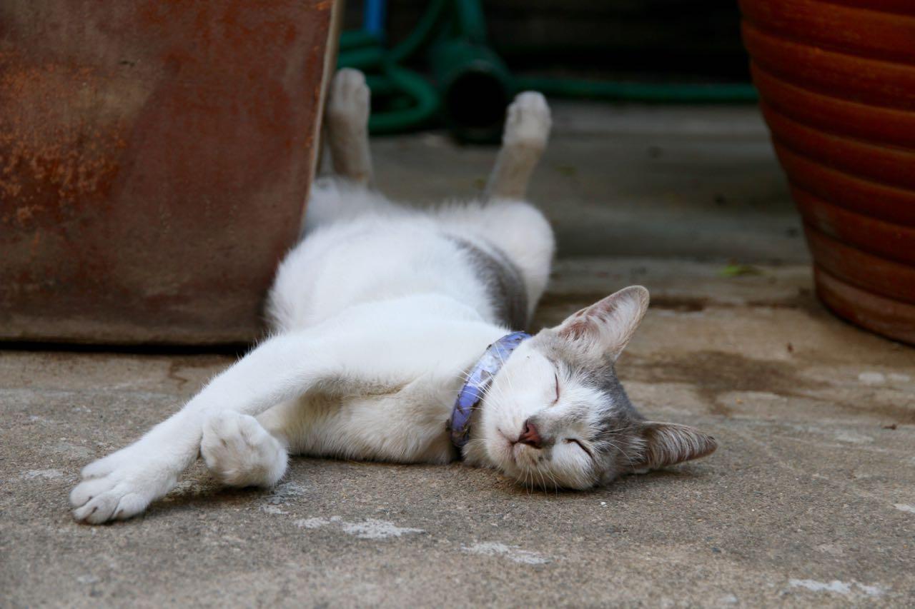 Minnow sleeping