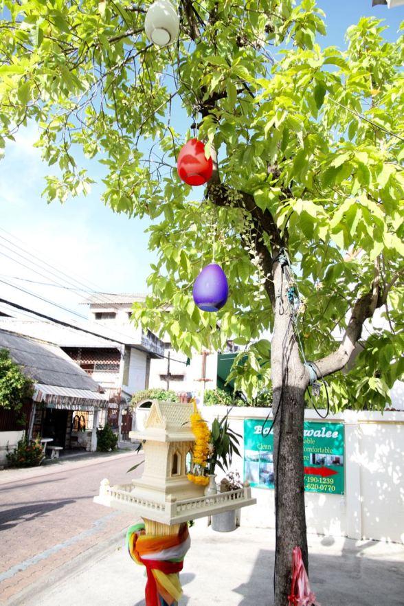 Chiang Mai bright tree