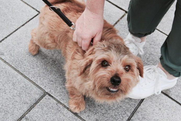 Dogs I met in Dusseldorf