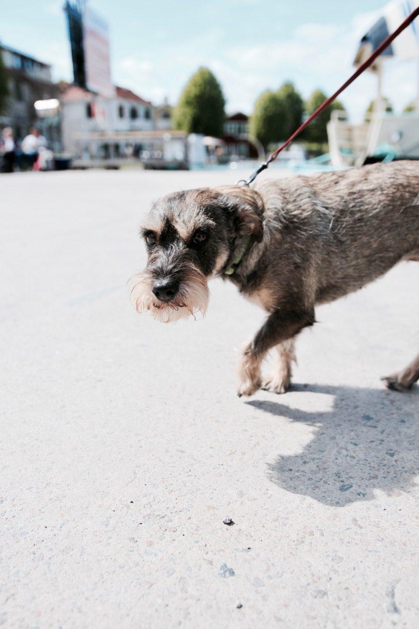 Gorgeous dogs exploring Stockholm, Sweden and Stockholm Archipelago