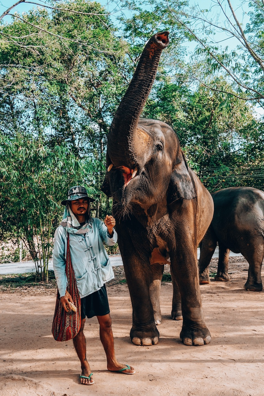 Best things to do in Phuket- Thailand Green Elephant Sanctuary Park - 6