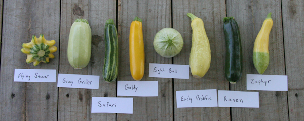 2014 squash varieties