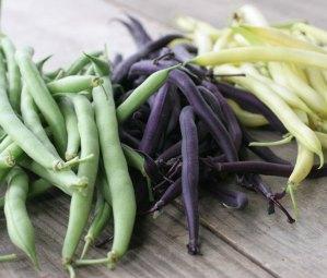 2015 bean varieties