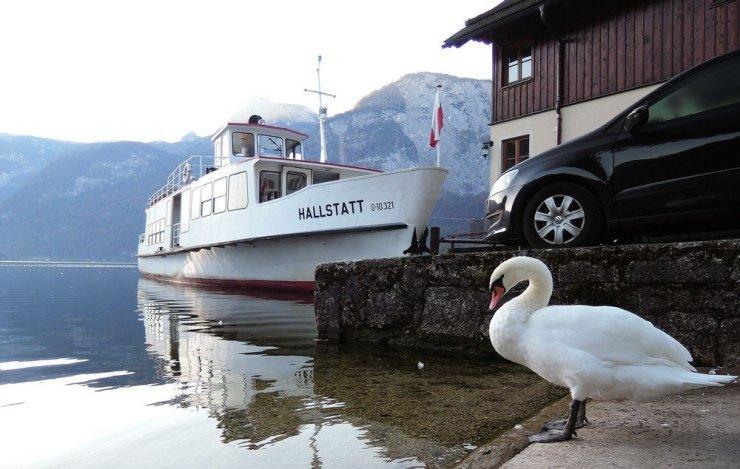 This swan walking along Lake Hallstatt's boardwalk knows how to make a good shot perfect.