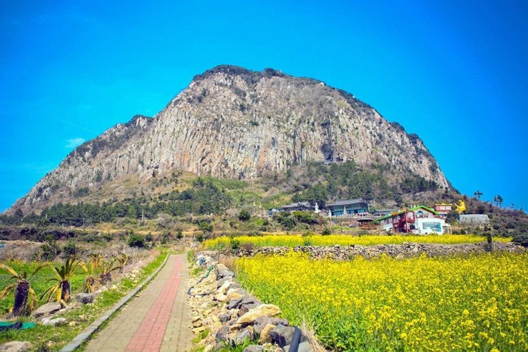 Drive around Jeju, South Korea's favorite holiday destination and see the island's stunning canola fields and natural landscapes. If you love nature, there's much to see and do in Jeju. Plan your holiday now – here's where to stay in Jeju.