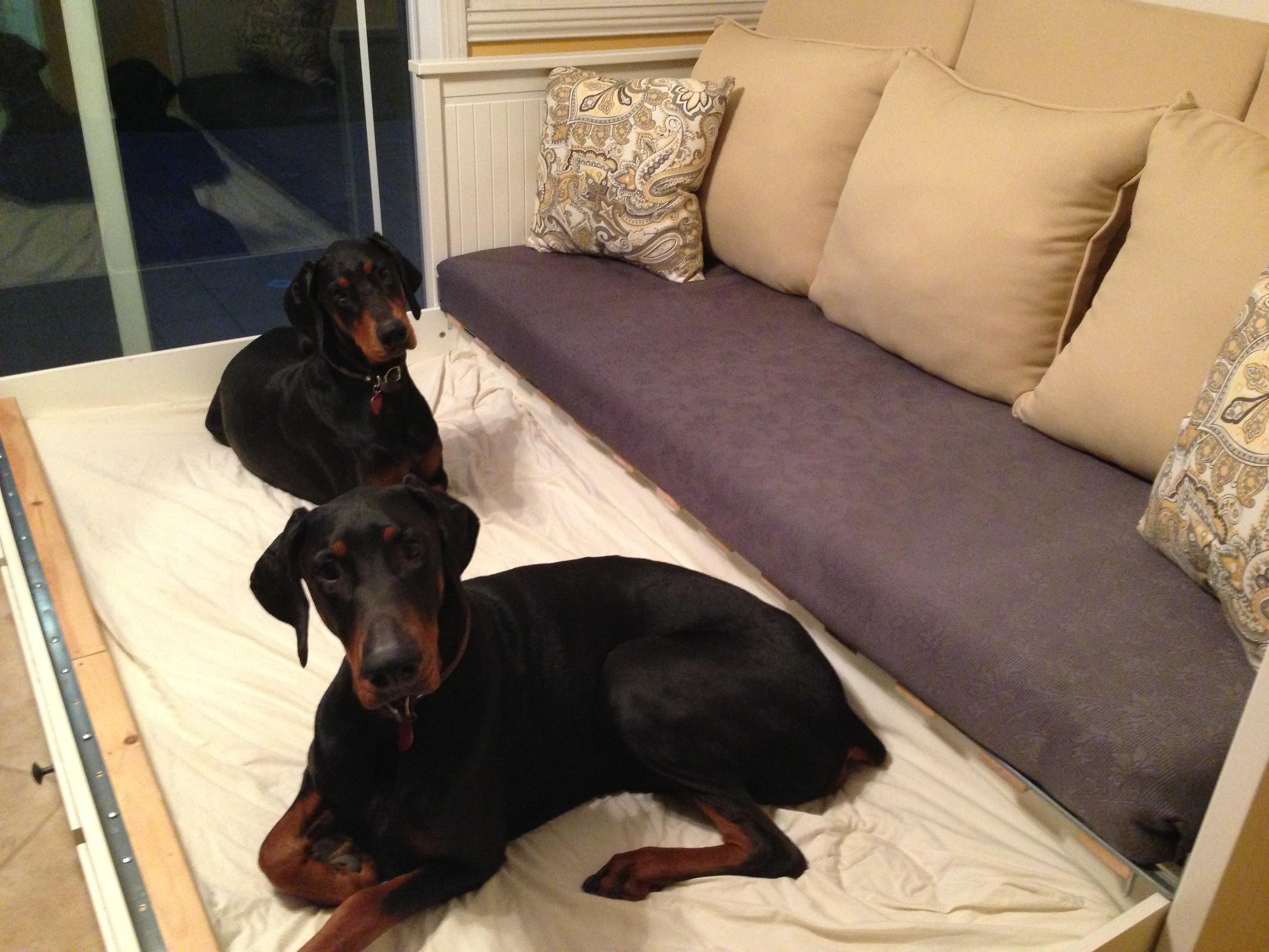 Dog Bed Bench Seating Littlehousesbigdogs
