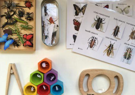 na stolečku hmyz