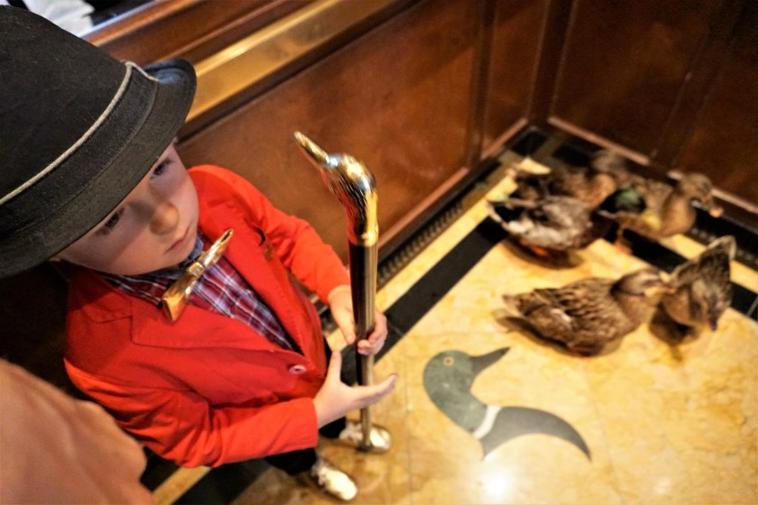 Peabody Ducks in the elevator at the Peabody Memphis