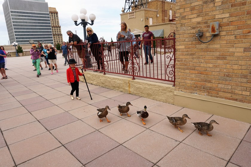 Leading the ducks to the palace - at the Peabody Hotel Memphis