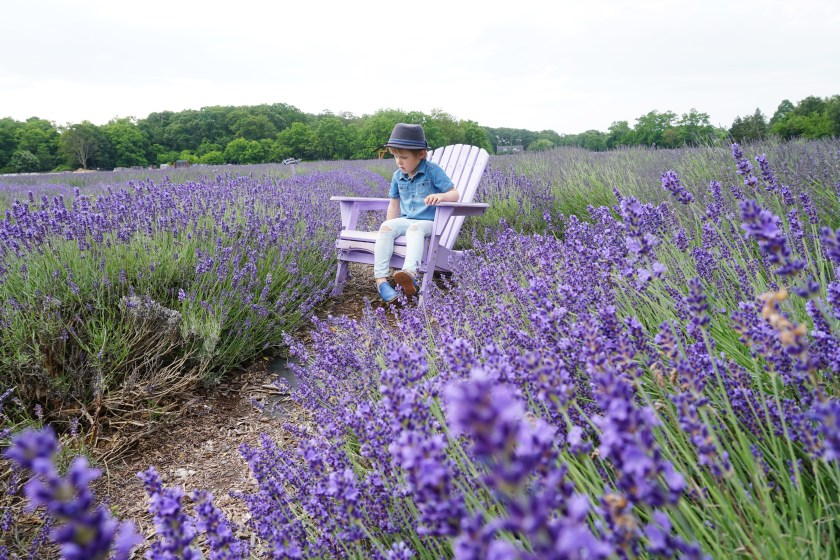 Sitting in the fields of Lavender by the Bay