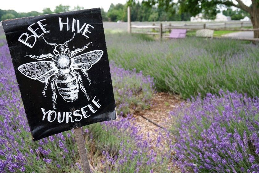 The Buzz on Lavender Honey at Lavender by the Bay