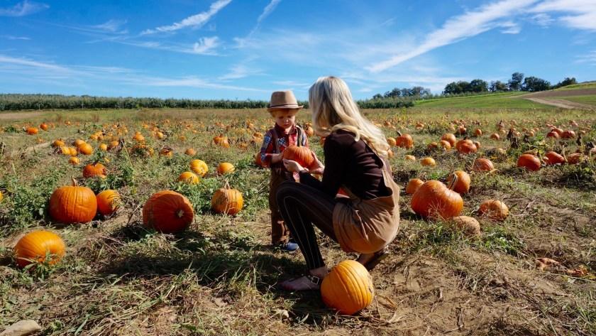 Autumn in the City - Pumpkin Picking