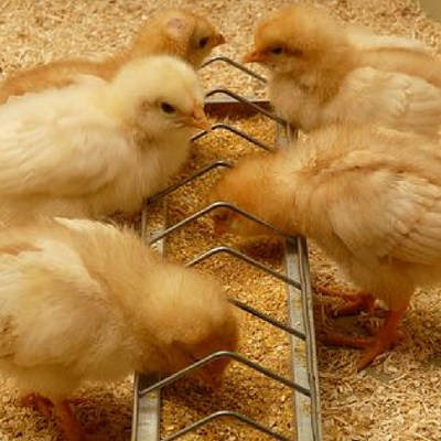 Important Tips when Preparing for Poultry