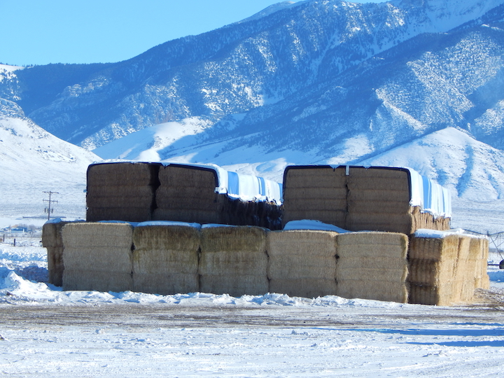 hay stack and straw