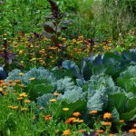 Beautiful vegetable garden with flowers mixed in