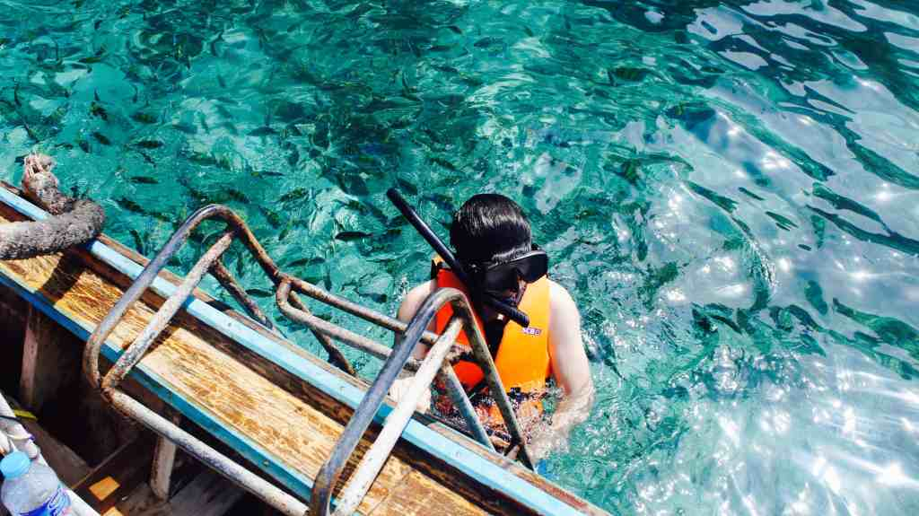snorkelling with sharks in Fiji