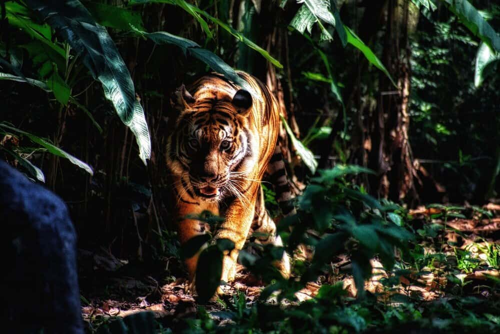 ecotourism protects vulnerable wildlife
