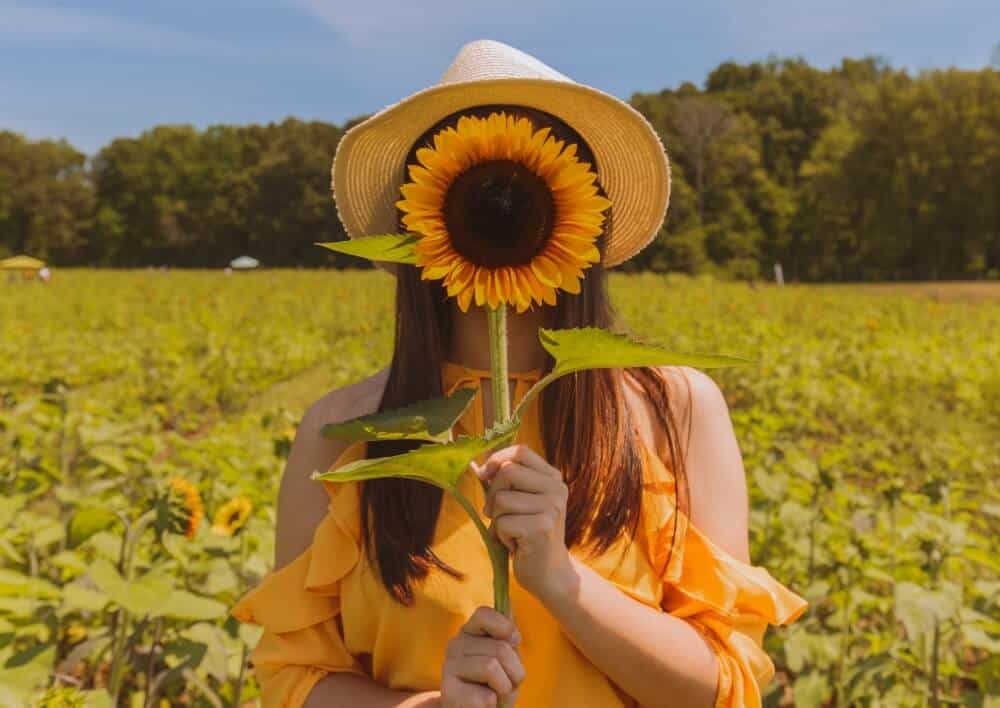 Woman holding sunflower to face