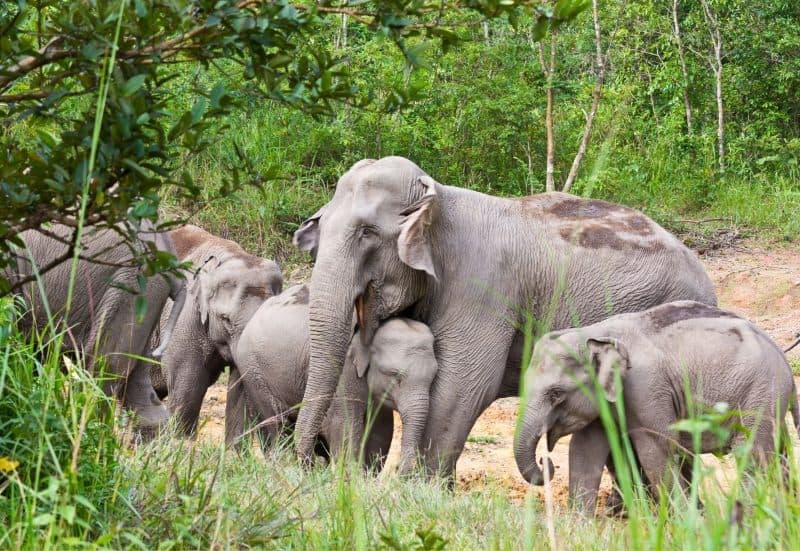 One of the best ethical animal experiences in Thailand is seeing the elephants at Chang Chill.