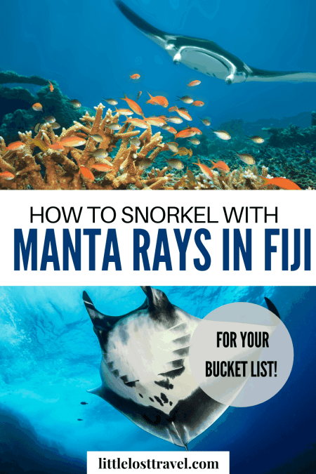 Is swimming with manta rays on your bucket list? Fiji is one of the few places in the world where you can do this.Find out what it's like to snorkel with these alien-looking creatures in Fiji. Check out this complete guide to swimming with manta rays in Fiji. #mantarays #fiji