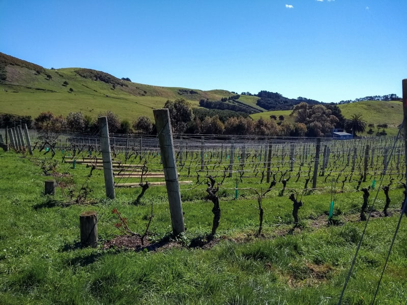 Stonyridge is one of the best places to go wine tasting in New Zealand
