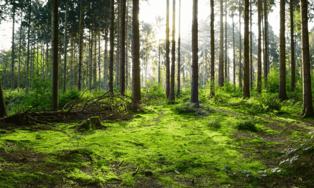 Forest Bathing Therapy: What It Is and How to Do It