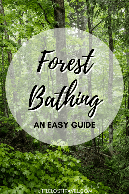 Forest bathing is the Japanese art of shinrin-yoku. Read this article to discover why forest bathing is good for your mental wellbeing and learn how you can do it easily.