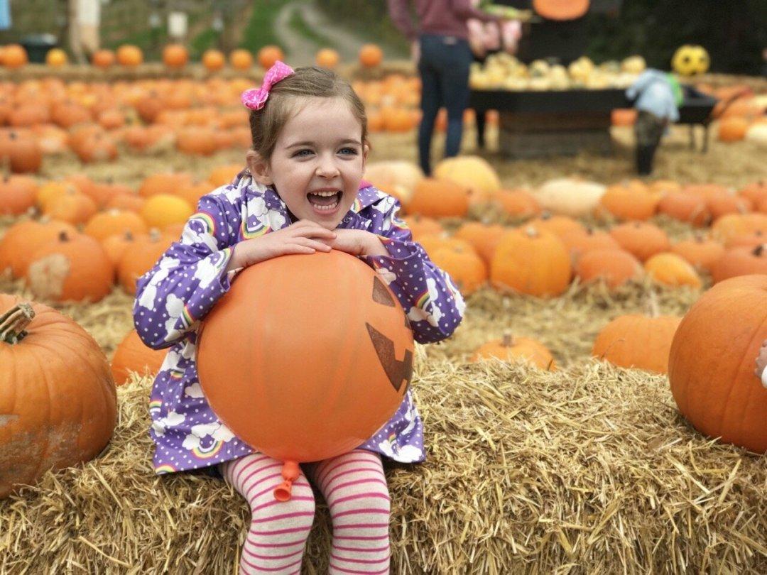 Pumpkin Picking In Essex