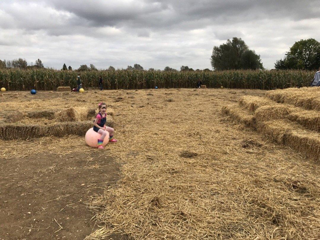 Pumpkin Picking In Essex centre of the maize maze