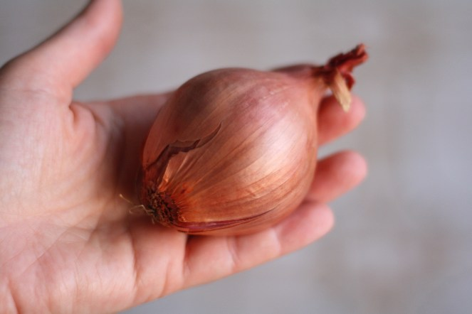 A shallot in my hand
