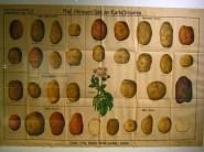 Kartoffelmuseum