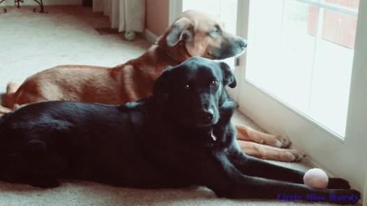 My Constant Companions