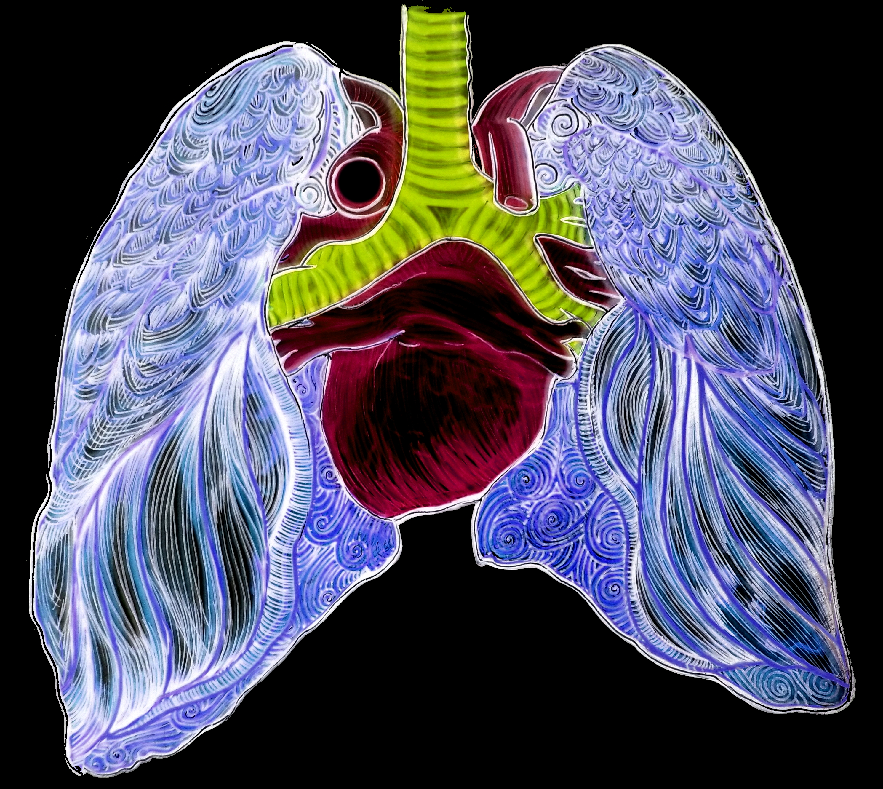 X Ray Lungs